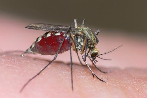 A Well Thought Out Scream By James Riordan GOVERNMENT MOSQUITO DRONES COULD EXTRACT YOUR DNA