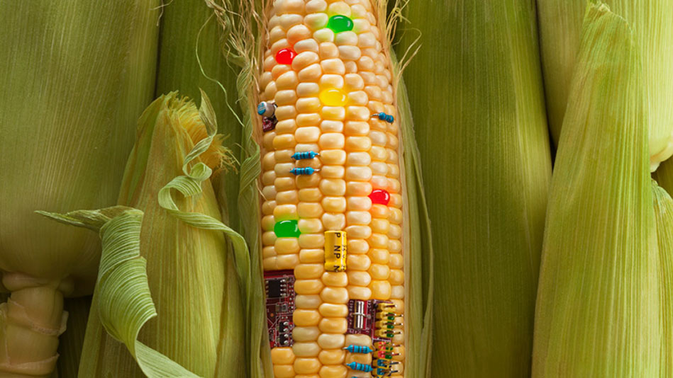 genetic engineering is not safe essay Genetically modified foods: harmful or  genetically-modified foods  can be very time consuming and are often not very accurate genetic engineering,.