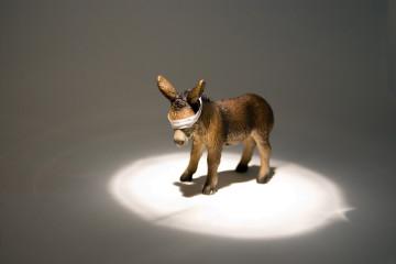 Donkey Interrogation