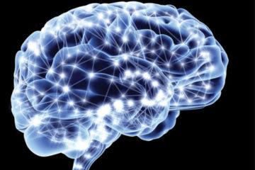 neuropace brain image