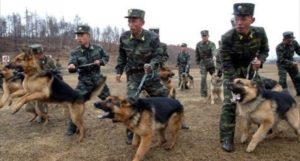 North korean police & Dogs